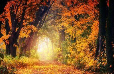 Miris jeseni